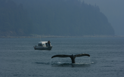 2pAB9 – Vocal behavior of Southeast Alaskan humpback whales: context matters – Michelle Fournet