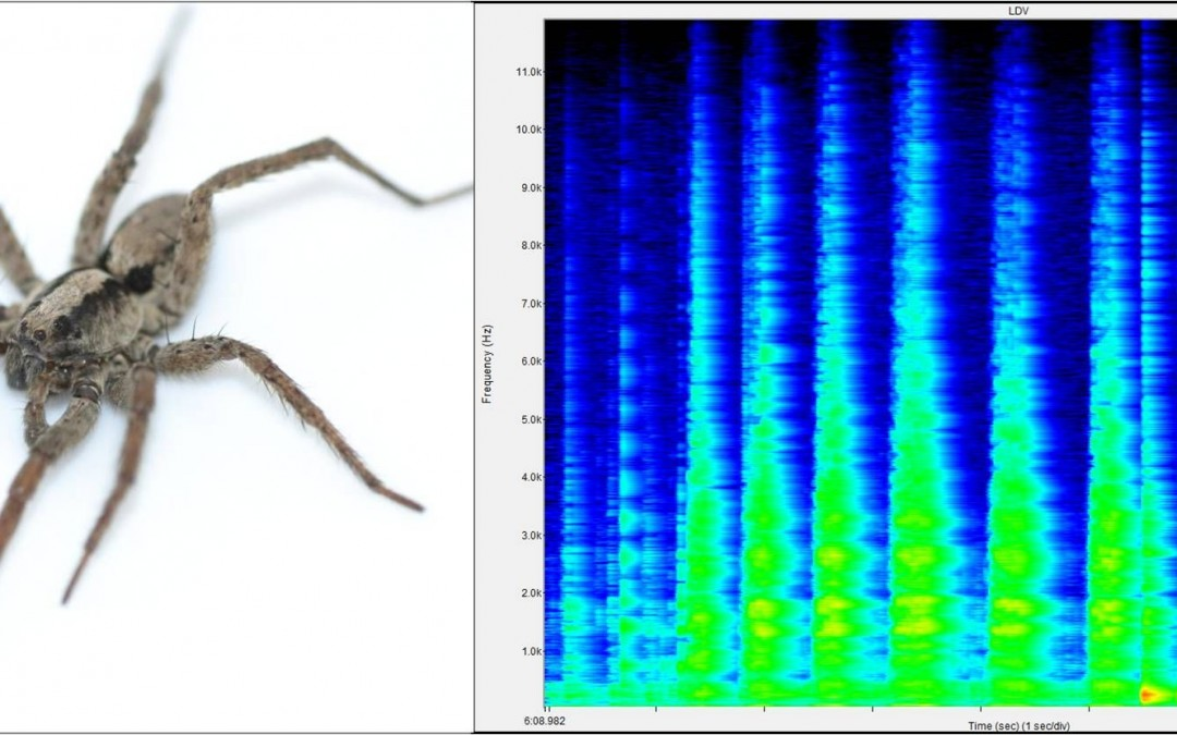 """4pAB3 – Can a spider """"sing""""? If so, who might be listening? – Alexander L. Sweger, George W. Uetz"""