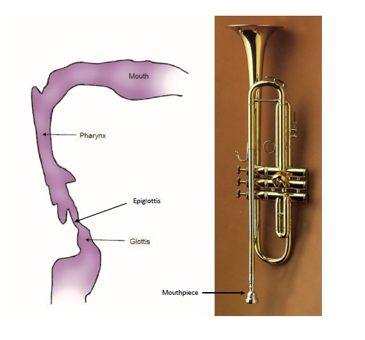 Titze_Fig2_airway_trumpet