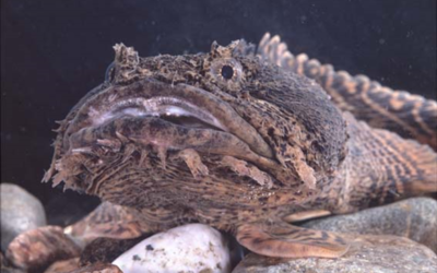 """2pAB2 – """"Sound pollution decreases the chances of love for oyster toadfish""""  – Rosalyn Putland"""